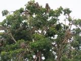 36 - Murchison Falls NP