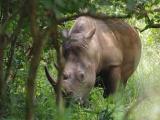 79 - Ziwa Nashorn-Schutzgebiet