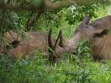 80 - Ziwa Nashorn-Schutzgebiet
