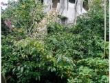 Crazy-House in Dalat