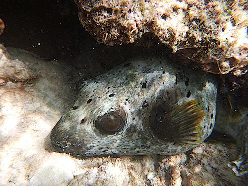 malediven-tauchen