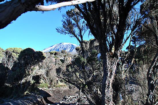 Kilimandscharo-Abstieg