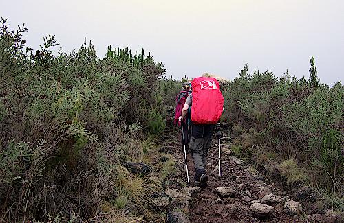 Kilimandscharo-Aufstieg