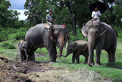 Nepal-Elephant-Breeding-Center