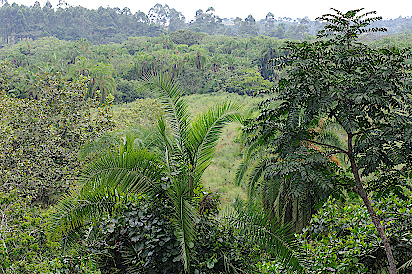 Kibale-Forest-Uganda