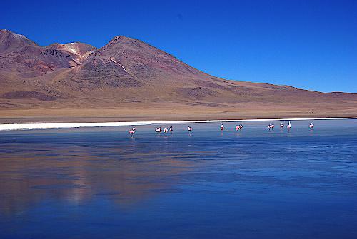 Laguna-Colorado-Bolivien