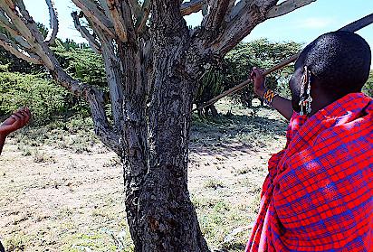 Massai-in-Kenia