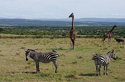 Massai-Mara-Game-Drive