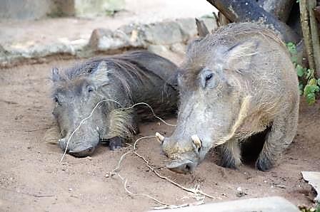 Murchison-National-Park-Uganda
