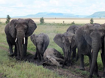 Serengeti-Elefenten-Massai