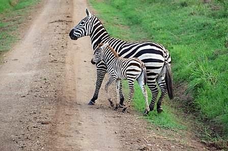 Kidepo-Nationalpark-Uganda