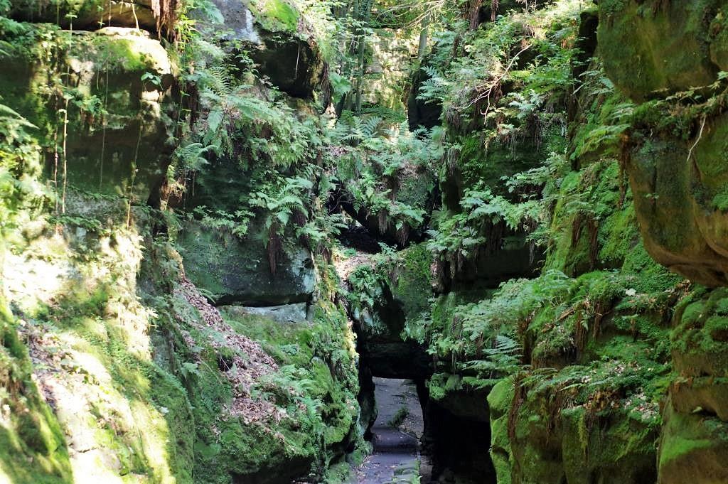 Der-Weg-geht-unter bewachsenen-Felsen-hindurch