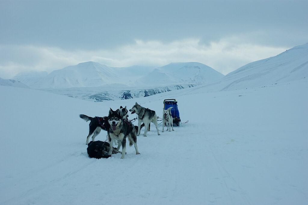 Mit-dem-Hundeschlitten-ueber-Spitzbergen