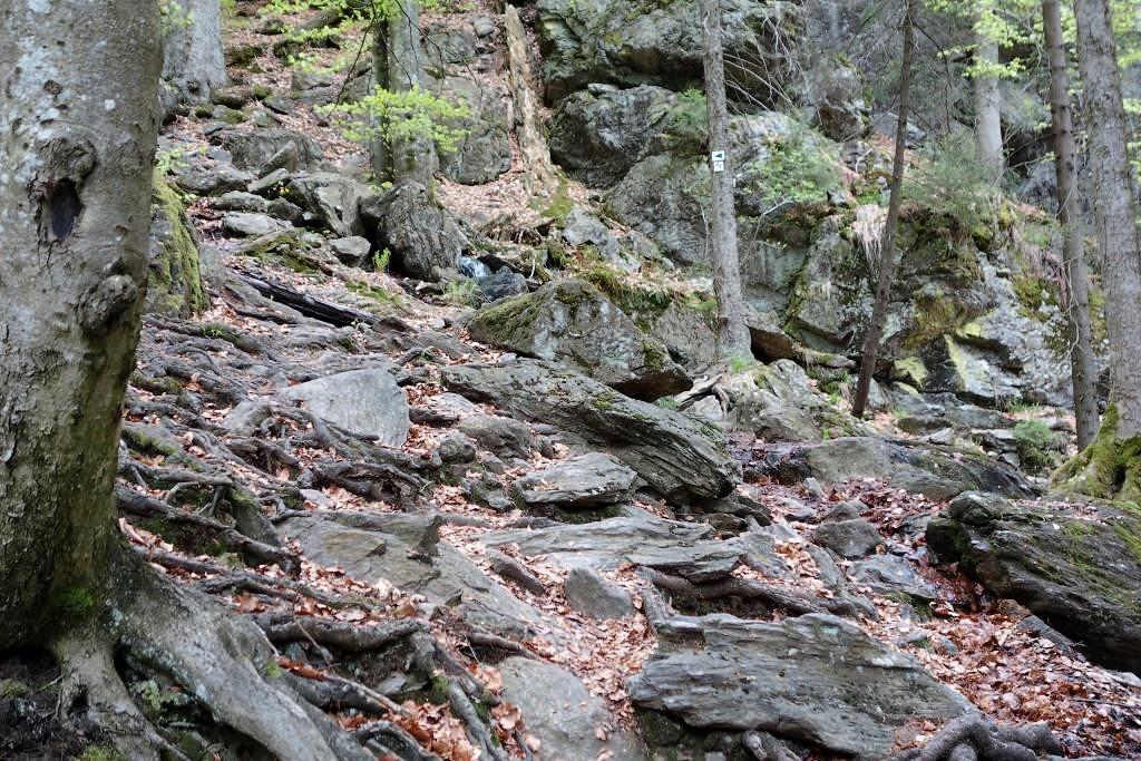Ueber-Felsen-und-Wurzeln-durch-das-Höllbach