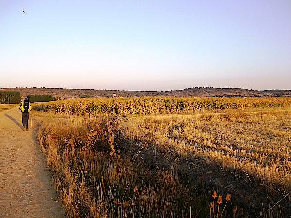 Jakobsweg-in-der-Morgensonne