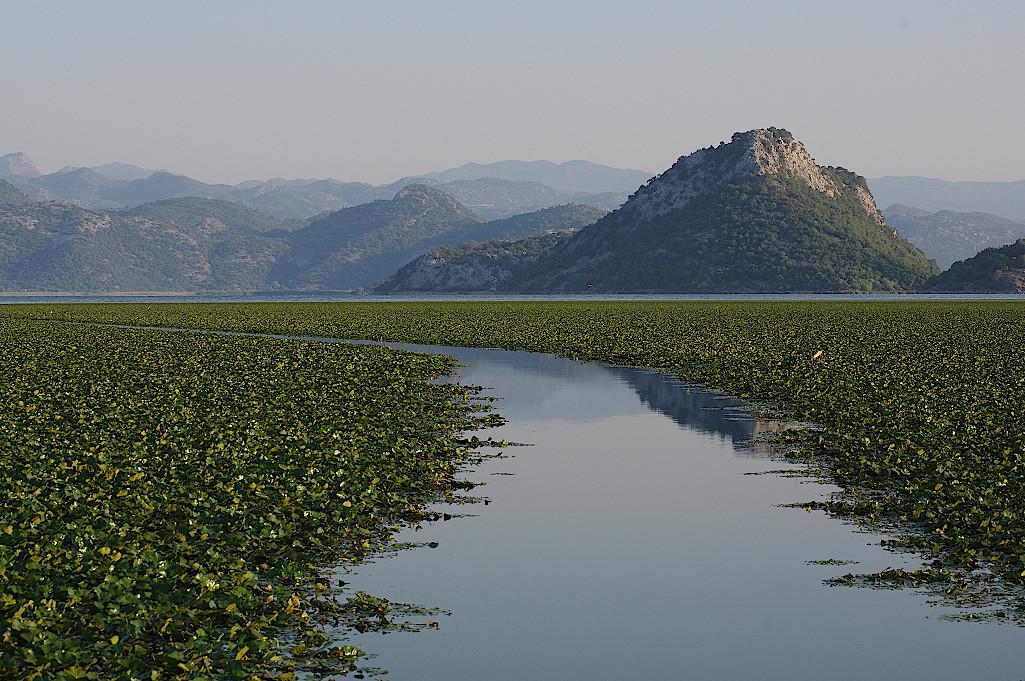 Fahrrinne-im-zugewachsenen-See