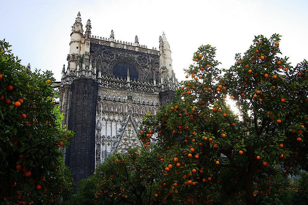 Orangenbaeume-vor-der-Kathedrale