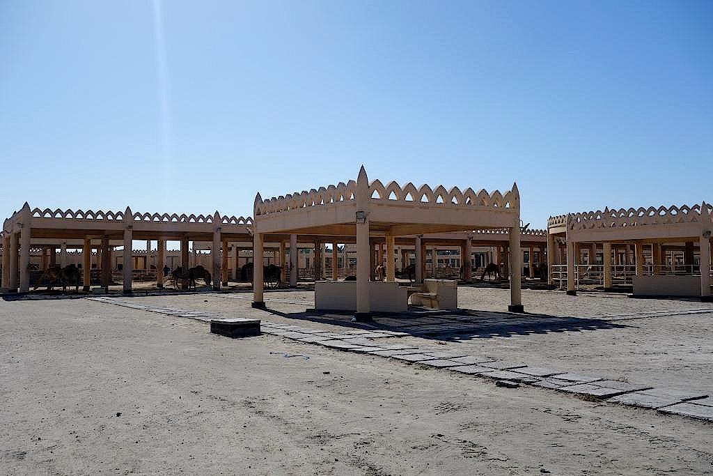 Bahrain-Koenigliche-Kamelfarm