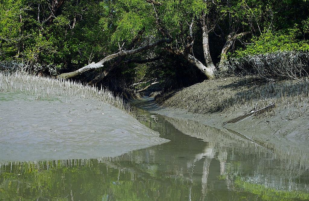 Sundarbans-Bangladesch