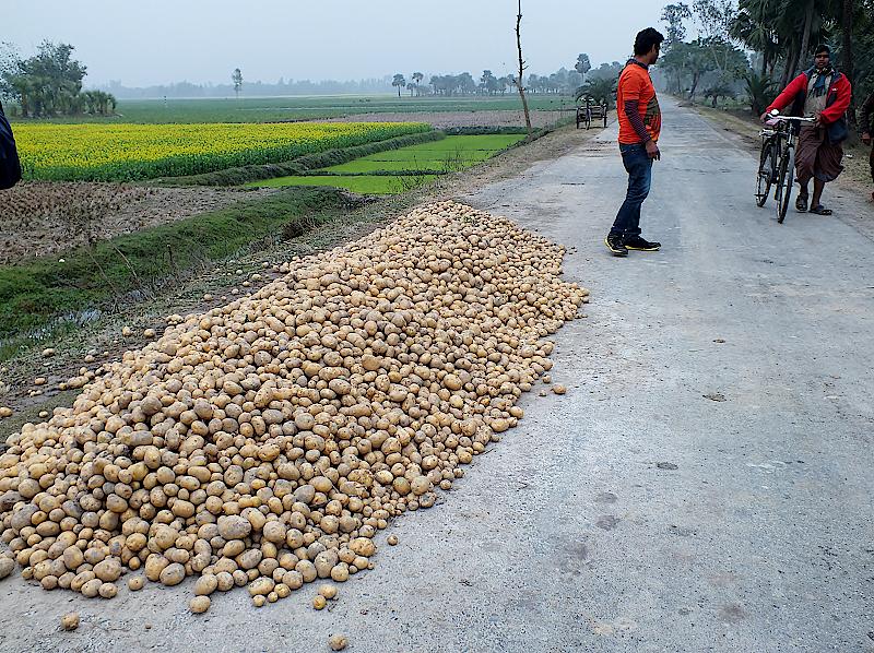 Die Kartoffelernte liegt zum Verkauf auf der Fahrbahn