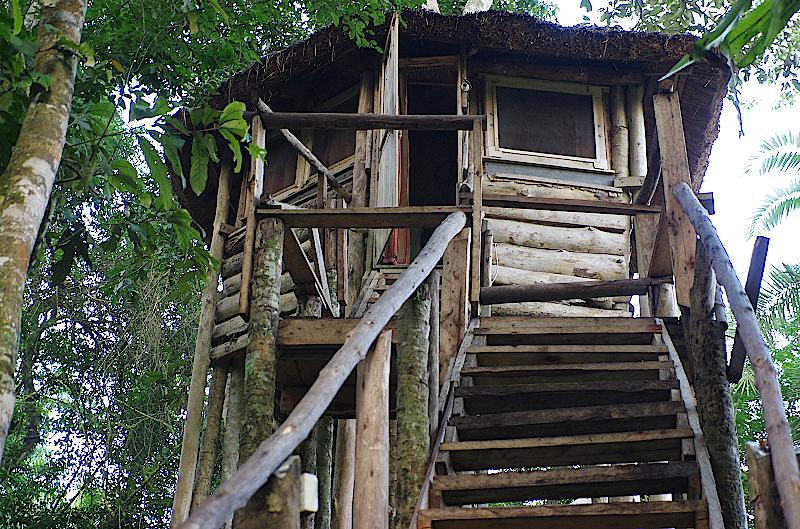 Baumhaus-im-Kibale-Forest-in-Uganda