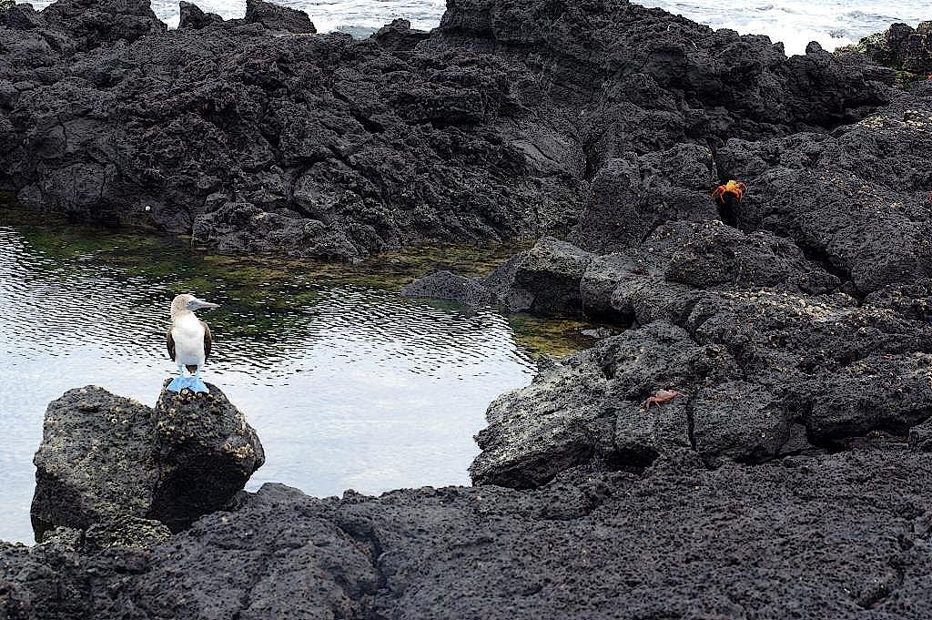 Isla-Lobo-Galapagos