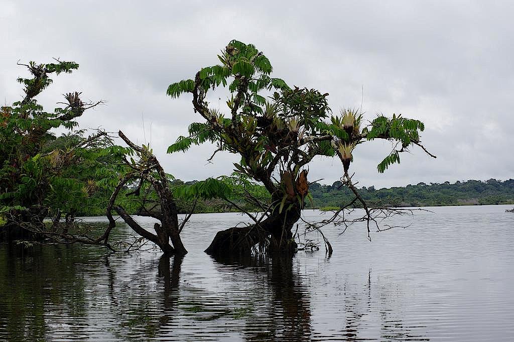 Cuyabeno-Reservat-Ecuador