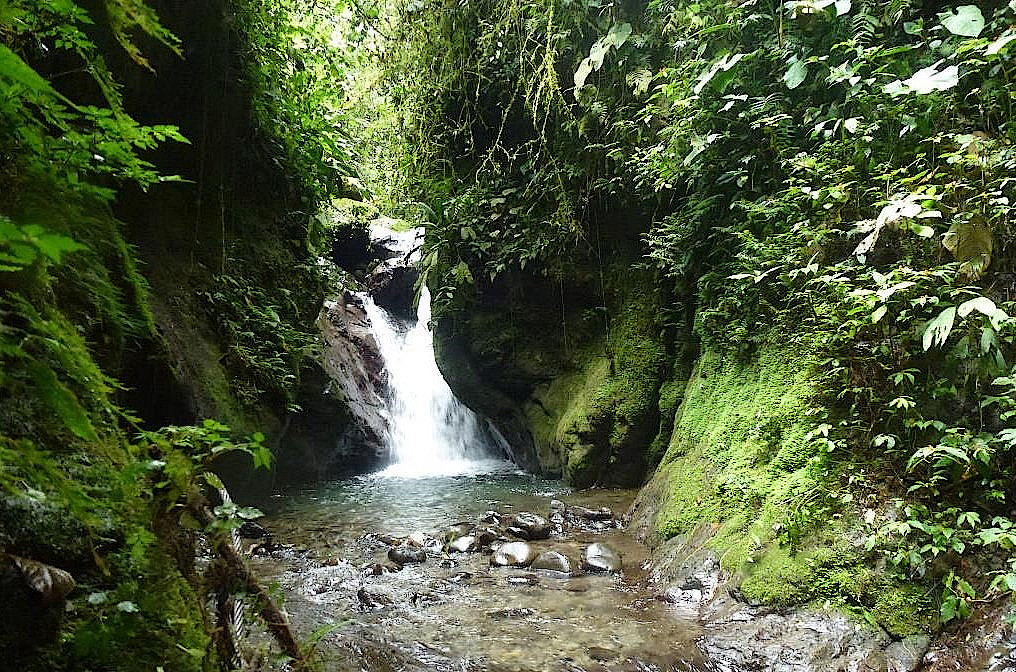 Wasserfall-Nebelwald-Ecuador