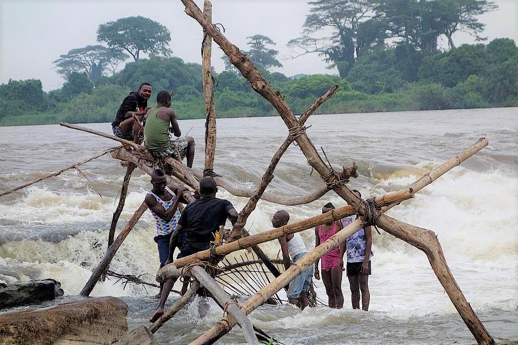 Fischer-von-Wagenia-DR-Kongo