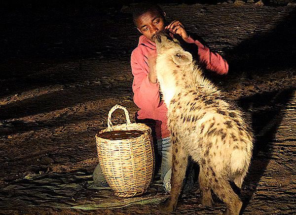 Hyänenfütterung in Harar