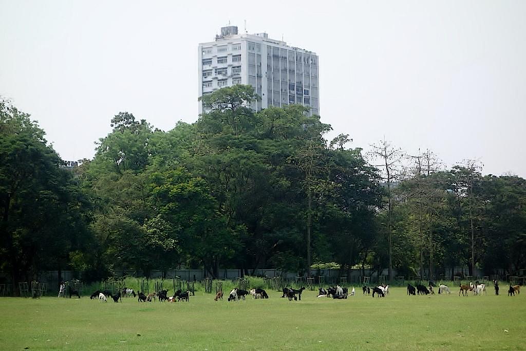 Kalkutta-Maidan-Park