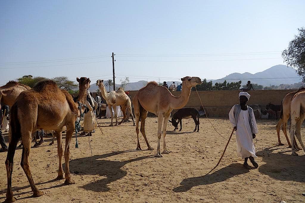 Kamelmarkt-in-Keren-Eritrea
