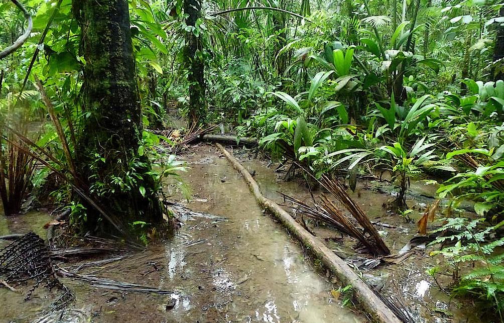 Methangaspfuetze-Cuyabeno-Reservat