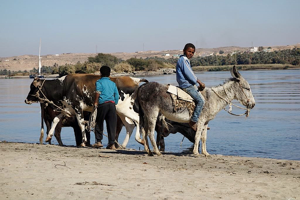 Kinder tränken die Tiere am Nil
