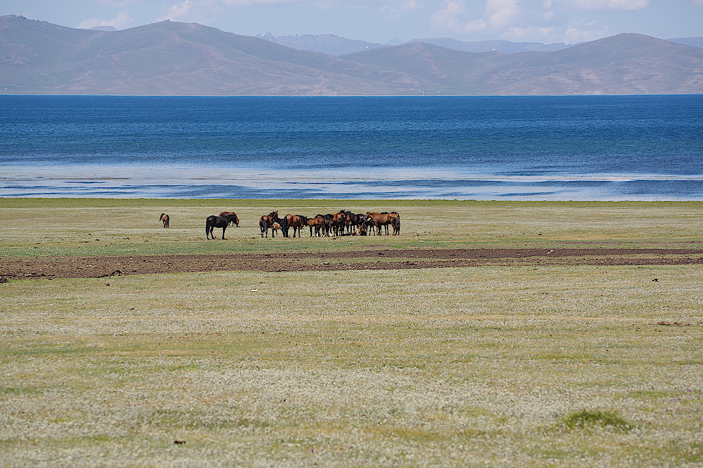 Pferde-am-Songkul-Kirgistan