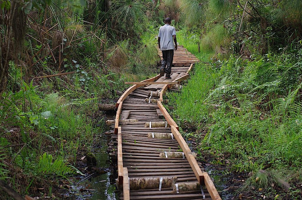Uganda-Sumpfgebiet-Kibale-Forest