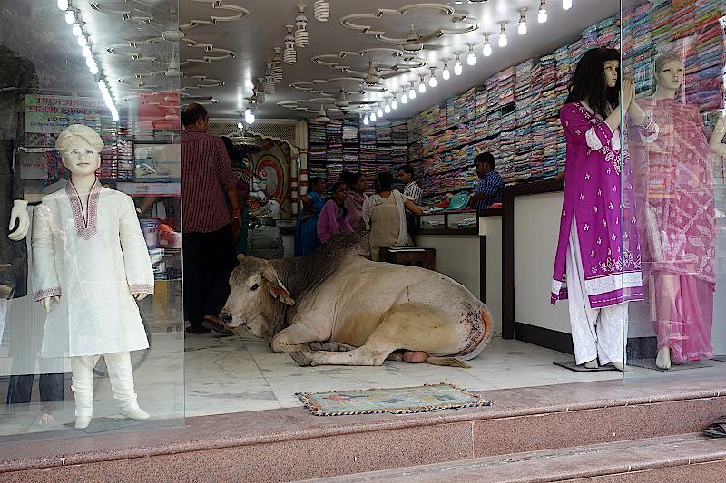 Eine Kuh liegt im Eingang zu einem Laden