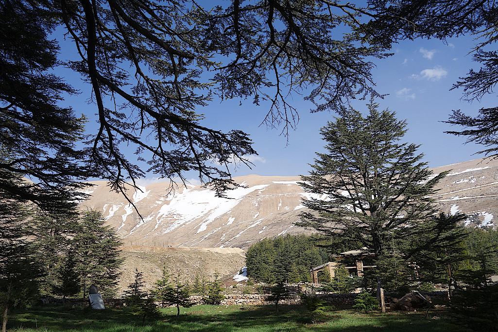 Wald-Gottes-Libanon