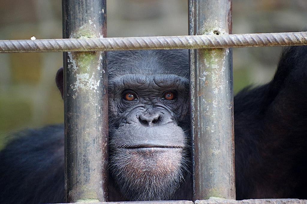 Zoo-Kisangani-DR-Kongo