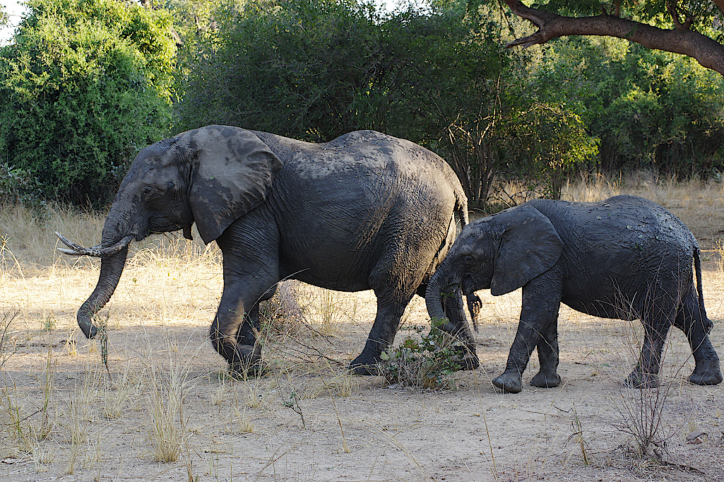 South-Luangwa-Nationalpark-Sambia