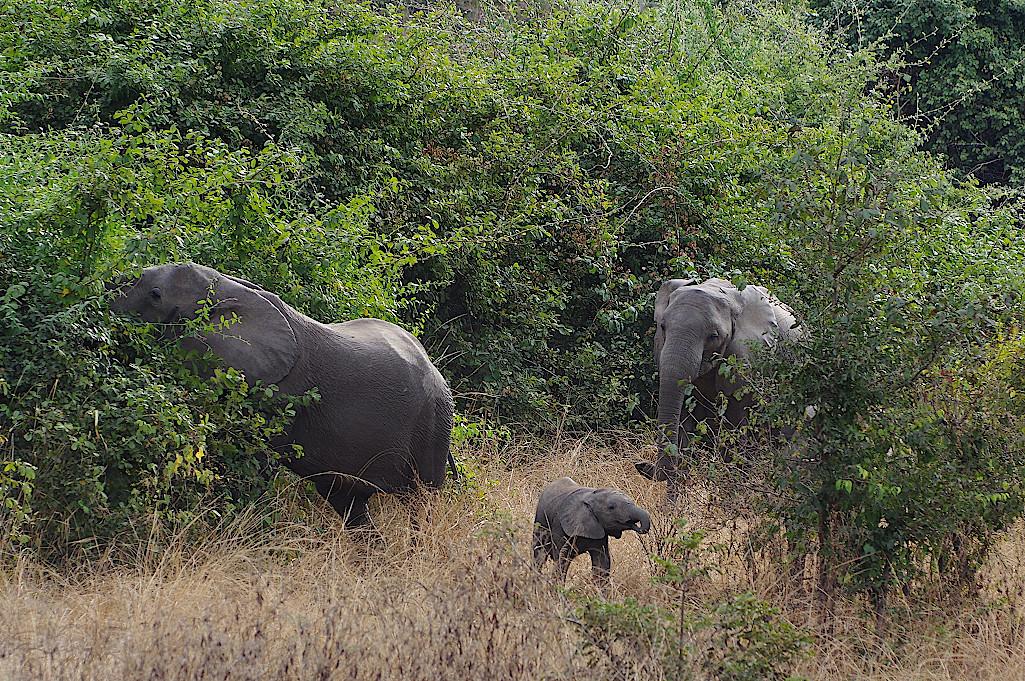Elefantenfamilie-im-South-Luangwa-Nationalpark-in-Sambia