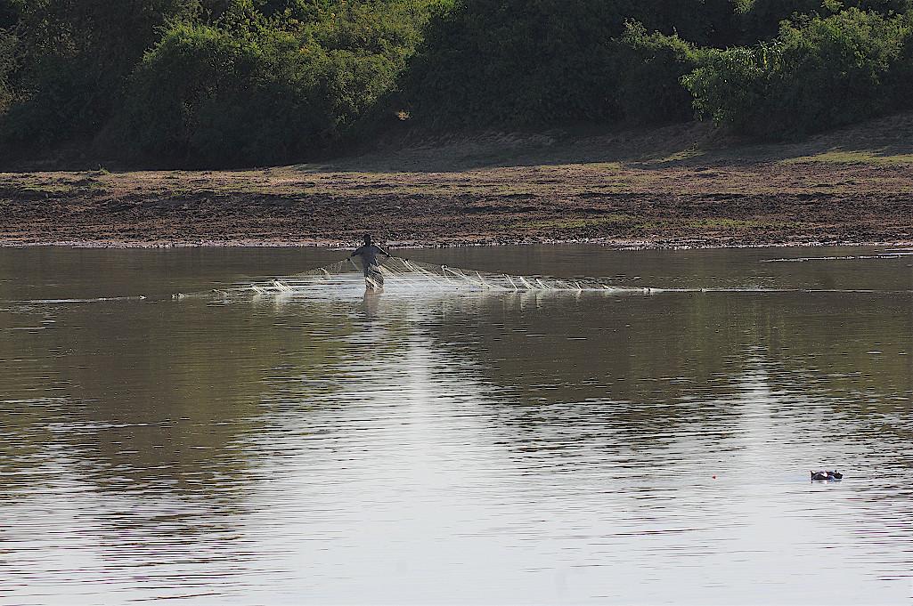Fischer-Luangwa-Fluss-Sambia