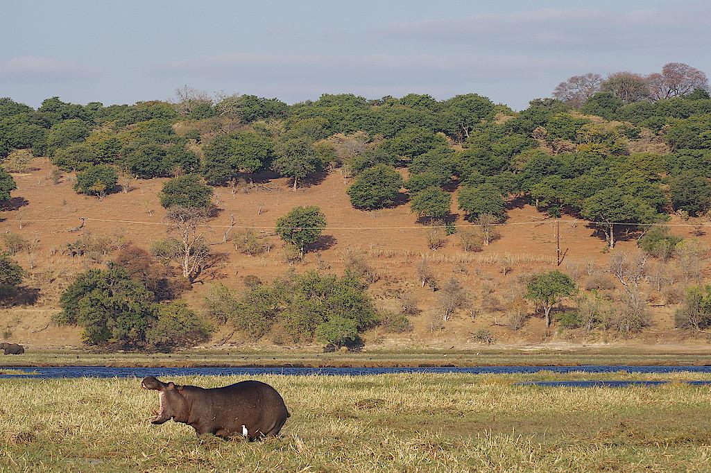 Sonnenuntergang-im-Chobe-Nationalpark-Botswana