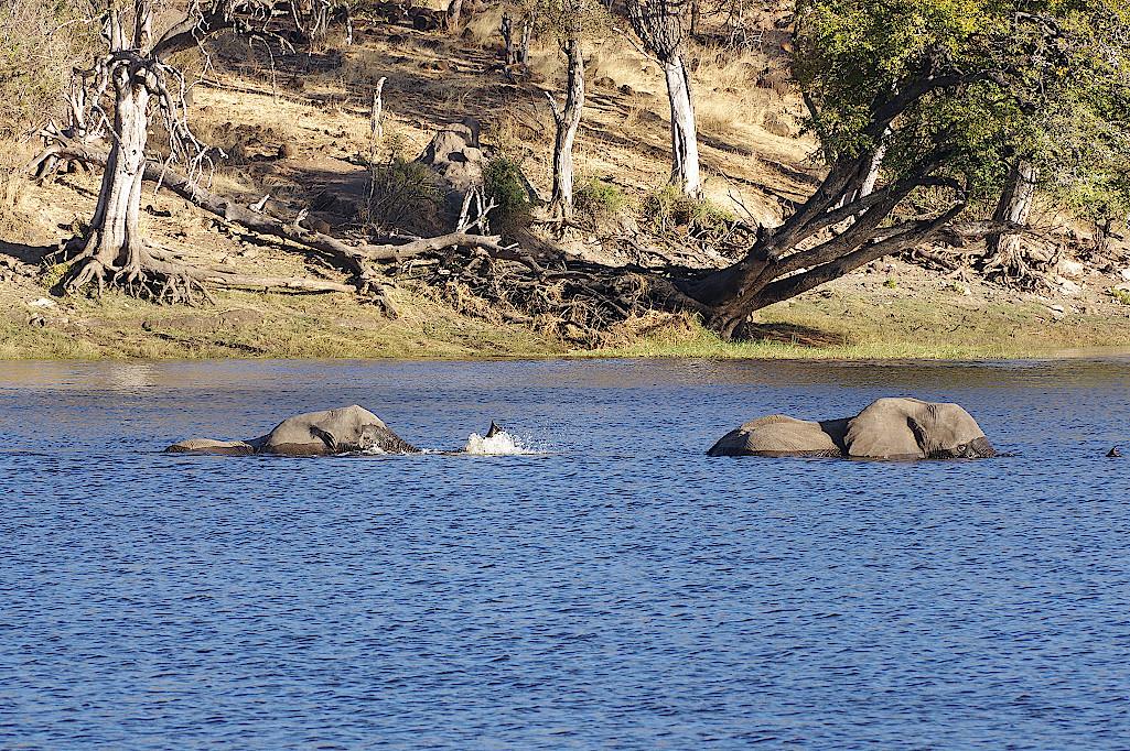 Elefanten-im-Chobe-Nationalpark-Botswana