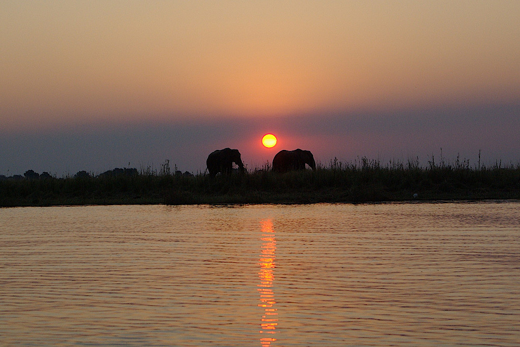 Chobe-Nationalpark-Botswana