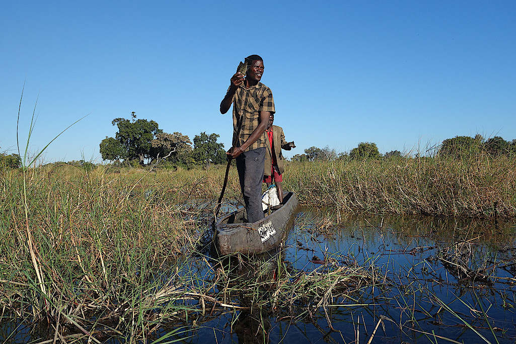 Fischer-im-Okavangodelta-Botswana