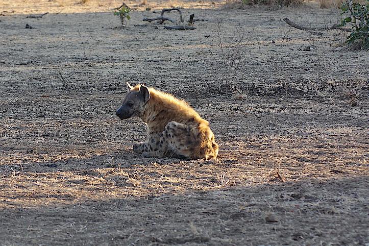 Luambe-Nationalpark-Sambia