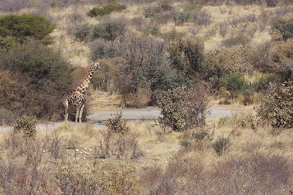 Wasserloch-Kalahari-Botswana