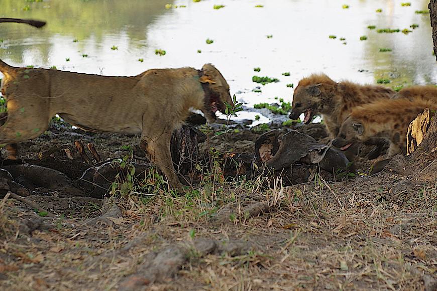 South-Luangwa-Nationalpark